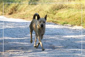 Lesiones por mordeduras de perro